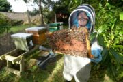 Five Un-Bee-Lieveable Celebrities Who Keep Bees!