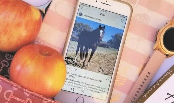 This Instagrammer Is Introducing Amazing Pictures Of Horses Into Our Instagram Feed